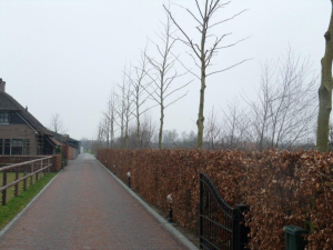 special pruning lane of trees