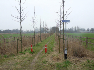 special pruning trees in a row
